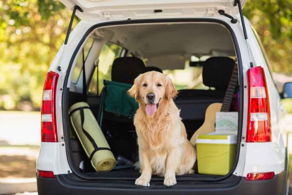 10 porad jak podróżować z domowymi zwierzętami